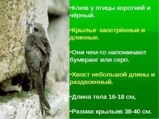 Клюв у птицы короткий и чёрный. Крылья заострённые и длинные. Они чем-то напо