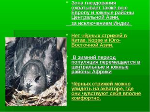 Зона гнездования охватывает также всю Европу и южные районы Центральной Азии,