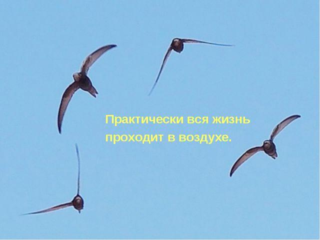 Практически вся жизнь проходит в воздухе.