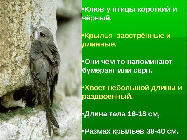 Клюв у птицы короткий и чёрный. Крылья заострённые и длинные. Они чем-то напо...