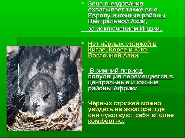Зона гнездования охватывает также всю Европу и южные районы Центральной Азии,...