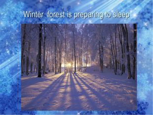 Winter forest is preparing to sleep