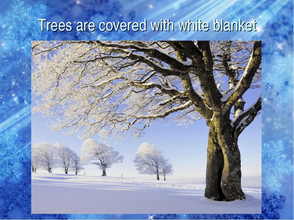 Trees are covered with white blanket