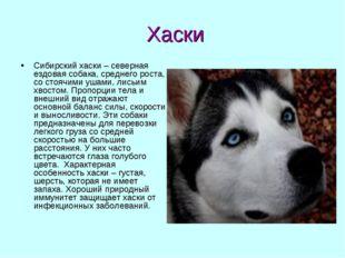 Хаски Сибирский хаски – северная ездовая собака, среднего роста, со стоячими