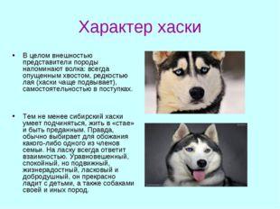 Характер хаски В целом внешностью представители породы напоминают волка: всег