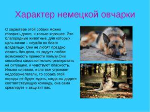 Характер немецкой овчарки О характере этой собаки можно говорить долго, и тол