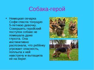 Собака-герой Немецкая овчарка Софи спасла тонущую 5-летнюю девочку. Совершить