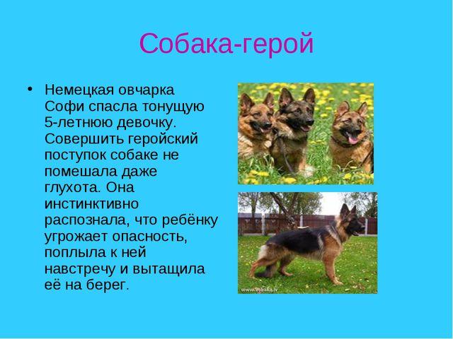 Собака-герой Немецкая овчарка Софи спасла тонущую 5-летнюю девочку. Совершить...