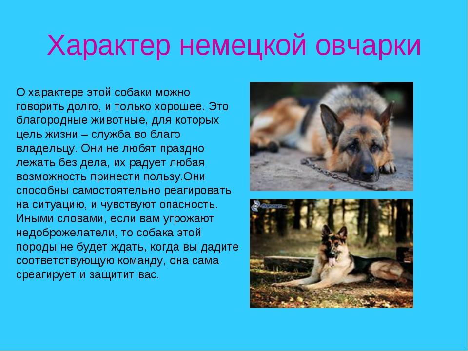 Характер немецкой овчарки О характере этой собаки можно говорить долго, и тол...
