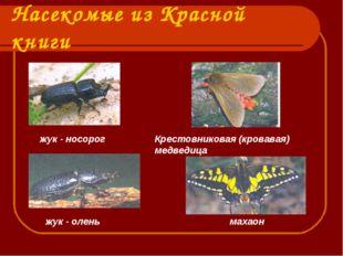 Насекомые из Красной книги жук - носорог Крестовниковая (кровавая) медведица