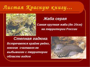 Листая Красную книгу… Жаба серая Самая крупная жаба (до 20см) на территории Р