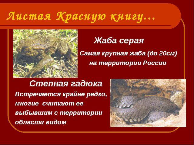 Листая Красную книгу… Жаба серая Самая крупная жаба (до 20см) на территории Р...