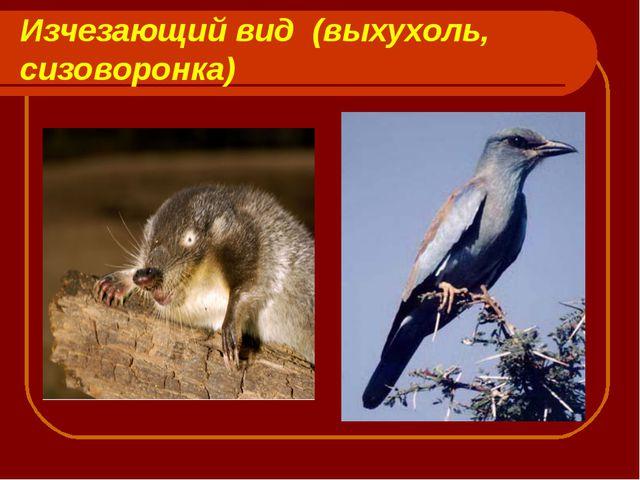 Изчезающий вид (выхухоль, сизоворонка)