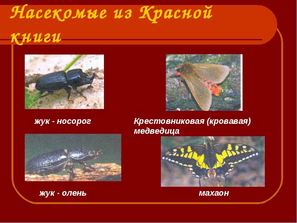 ознакомиться насекомые урала описание с картинками интерьер предполагает использование