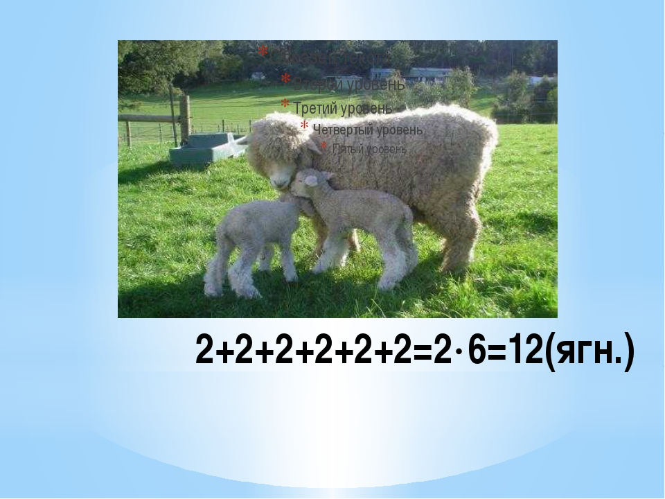 2+2+2+2+2+2=26=12(ягн.)