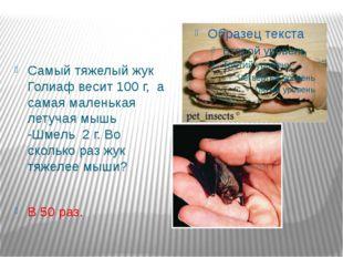 Самый тяжелый жук Голиаф весит 100 г, а самая маленькая летучая мышь -Шмель 2