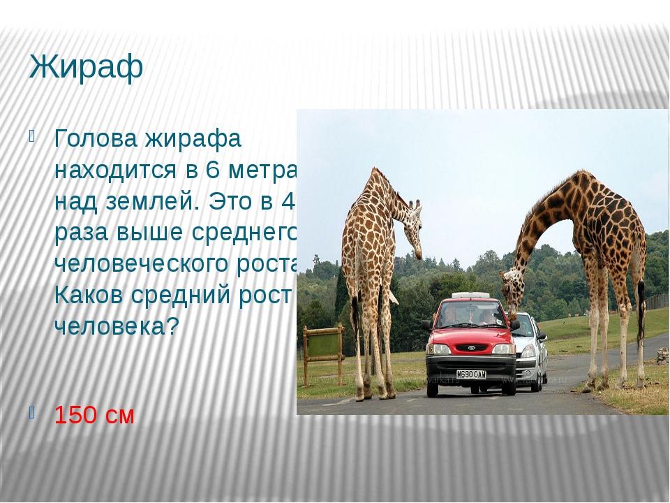Жираф Голова жирафа находится в 6 метрах над землей. Это в 4 раза выше средне...