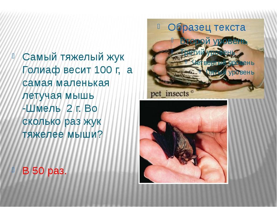 Самый тяжелый жук Голиаф весит 100 г, а самая маленькая летучая мышь -Шмель 2...
