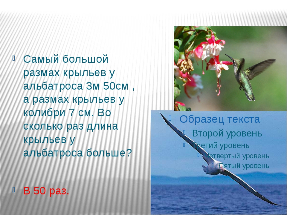 Самый большой размах крыльев у альбатроса 3м 50см , а размах крыльев у колибр...