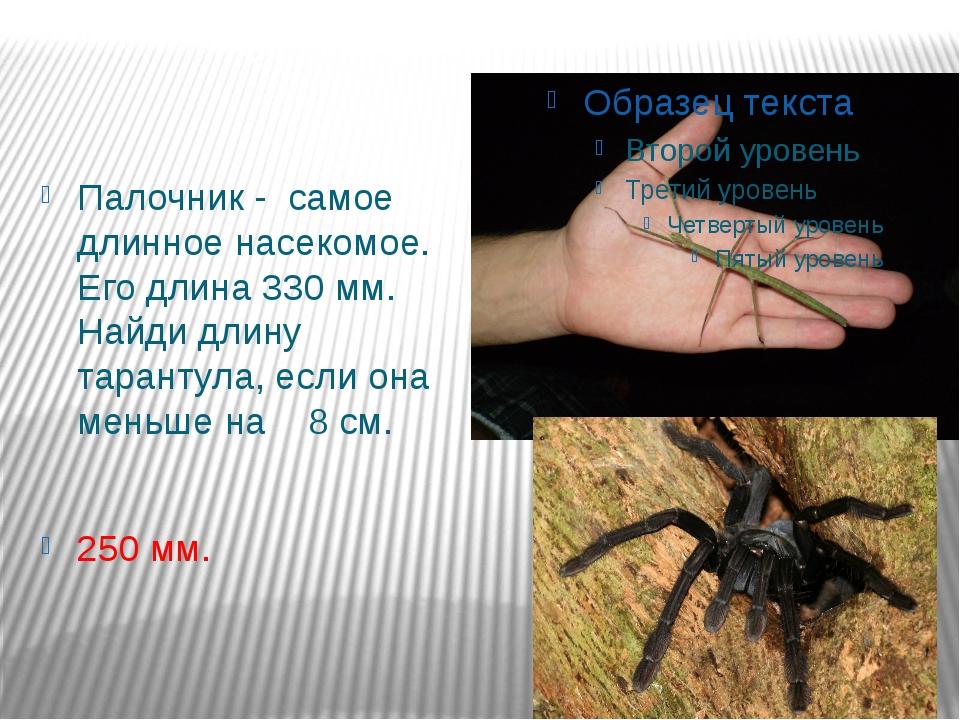 Палочник - самое длинное насекомое. Его длина 330 мм. Найди длину тарантула,...