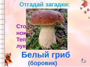 Стоял на крепкой ножке, Теперь лежит в лукошке. Белый гриб (боровик) Отгадай