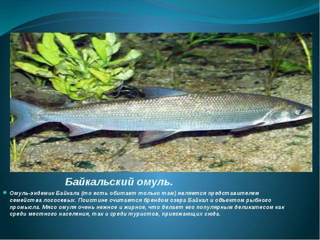 Байкальский омуль. Омуль-эндемик Байкала (то есть обитает только там) являетс...