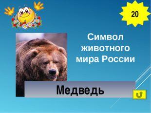 Символ животного мира России 20 Медведь