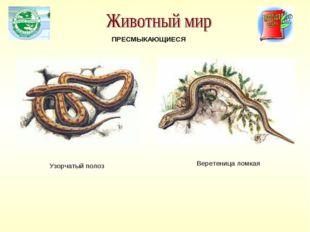 ПРЕСМЫКАЮЩИЕСЯ Узорчатый полоз Веретеница ломкая