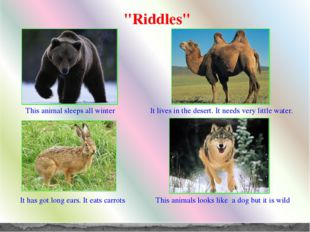 """Riddles"" This animal sleeps all winter It lives in the desert. It needs very"