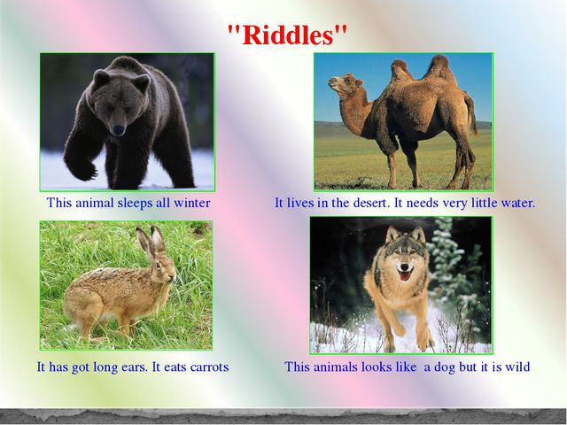 """Riddles"" This animal sleeps all winter It lives in the desert. It needs very..."