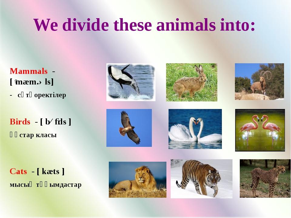 Mammals - [ˈmæm.əls] - сүтқоректілер Birds - [ bɜːds ] құстар класы Cats - [...