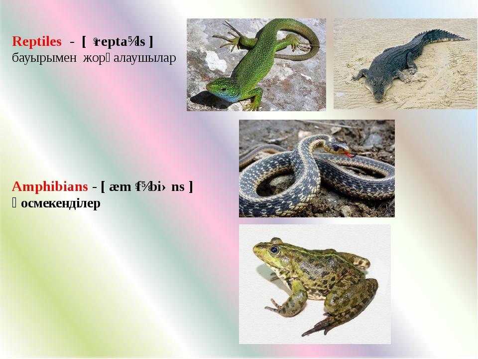 Reptiles - [ ˈreptaɪls ] бауырымен жорғалаушылар Amphibians - [ æmˈfɪbiəns ]...