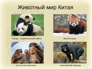 Животный мир Китая Панда – национальный символ Золотистая обезьяна Малая панд