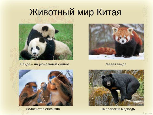 Животный мир Китая Панда – национальный символ Золотистая обезьяна Малая панд...