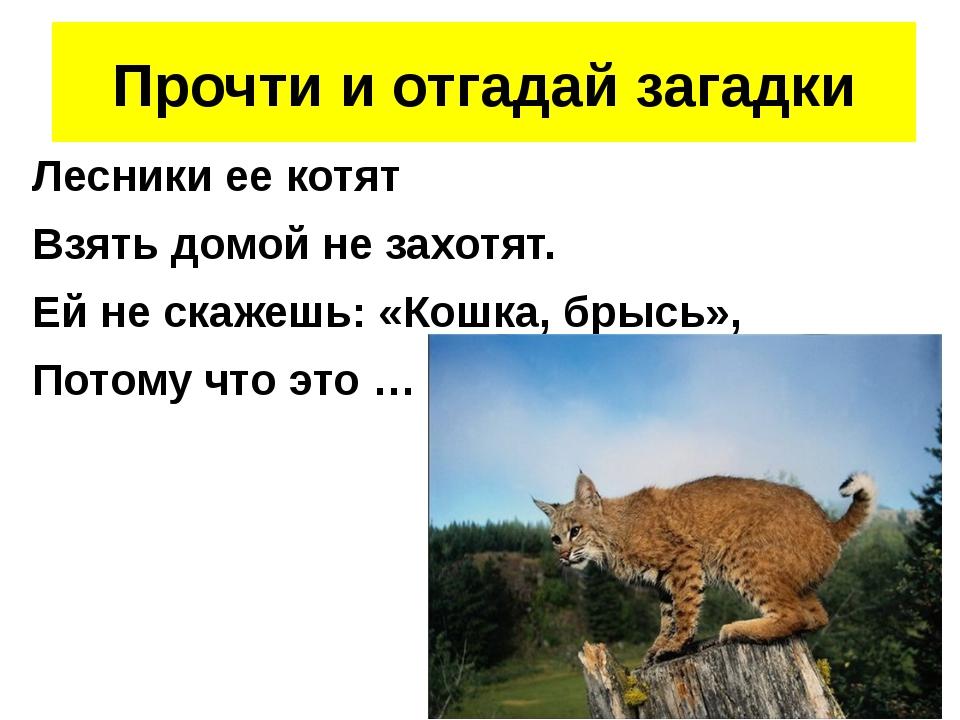 Лесники ее котят Взять домой не захотят. Ей не скажешь: «Кошка, брысь», Пото...