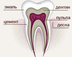 http://oralbiocomplex.ru/d/201860/d/251_2.jpg
