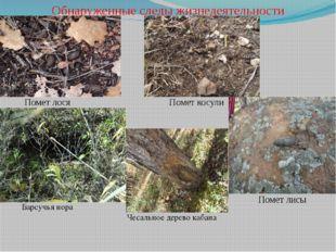 Обнаруженные следы жизнедеятельности Помет лося Помет косули Помет лисы Барсу