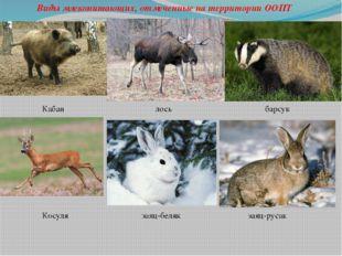 Виды млекопитающих, отмеченные на территории ООПТ Кабан лось барсук Косуля за