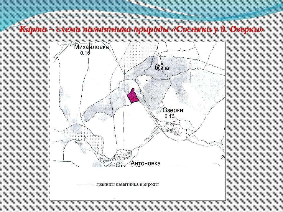 Карта – схема памятника природы «Сосняки у д. Озерки»