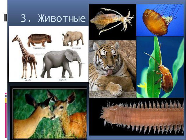 3. Животные