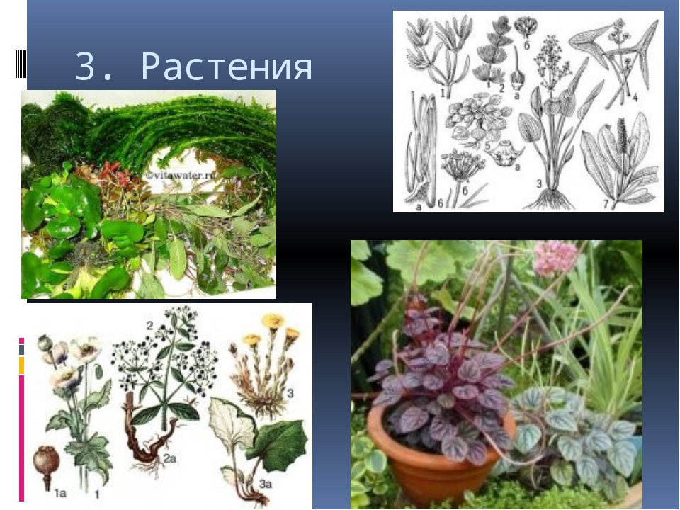 3. Растения
