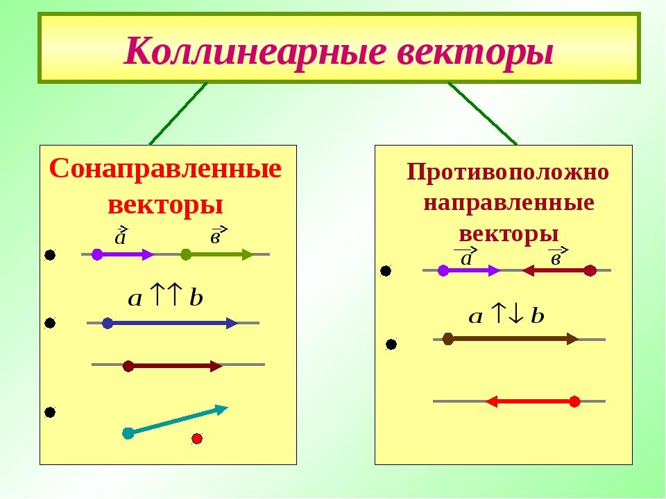 Коллинеарные векторы Противоположно направленные векторы Сонаправленные векто...