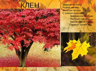 КЛЕН Закружила осень Рыжие метели, Золотые листья С кленов полетели Закружилс