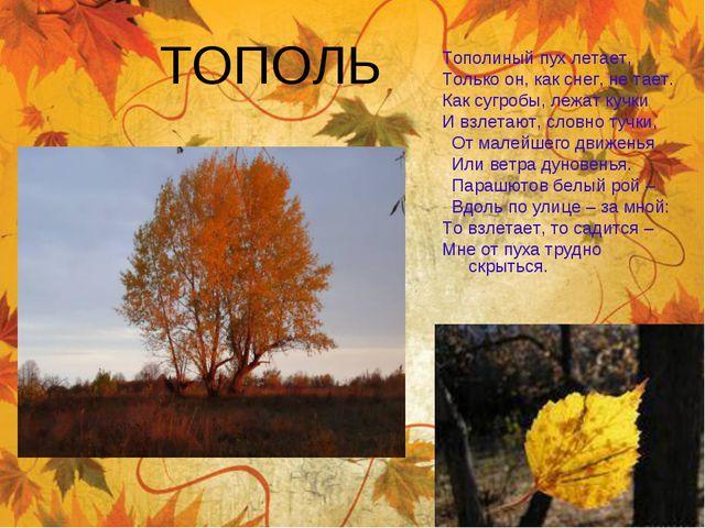 ТОПОЛЬ Тополиный пухлетает, Только он, как снег, не тает. Как сугробы, лежат...