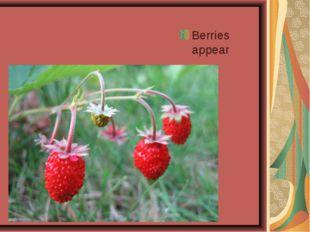 Berries appear