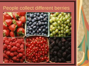 People collect different berries