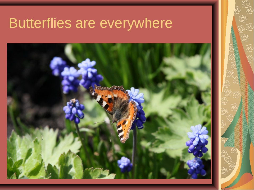 Butterflies are everywhere