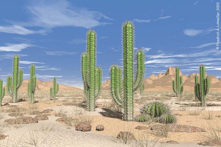 Desert Plant Cactus