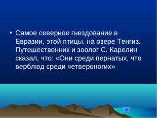 Самое северное гнездование в Евразии, этой птицы, на озере Тенгиз. Путешестве