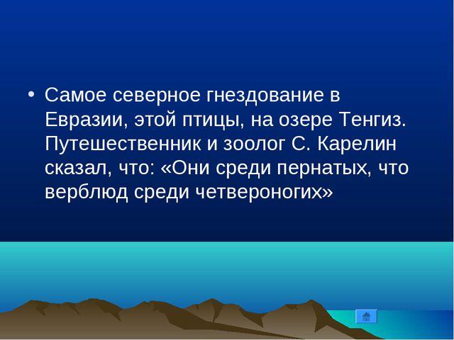 Самое северное гнездование в Евразии, этой птицы, на озере Тенгиз. Путешестве...